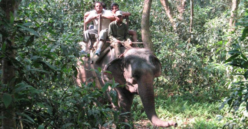 Chitwan Elephant Safari Tour