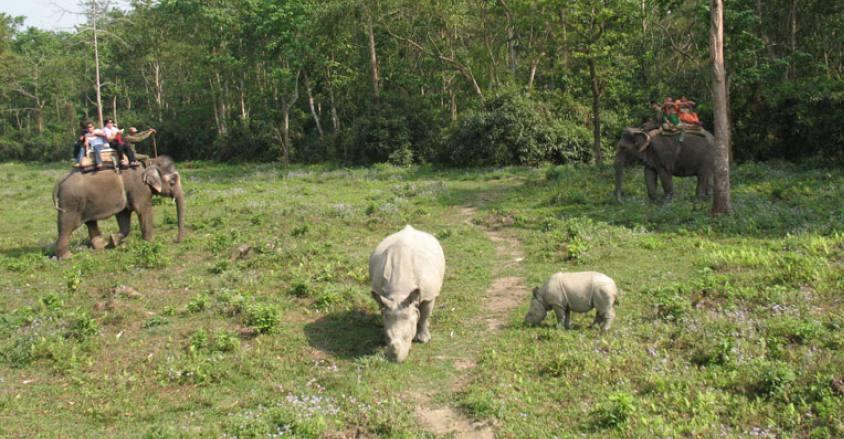 Chitwan Jungle Safari Tour in Nepal